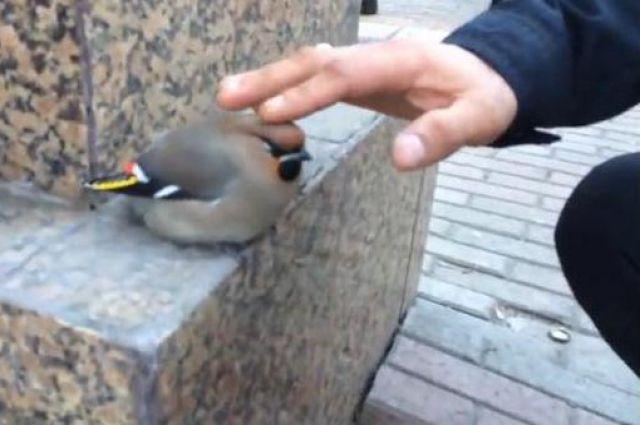 Певчие птицы в опасности