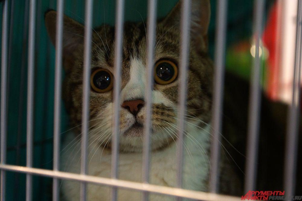 Организатором мероприятия выступил клуб любителей кошек «Регул».