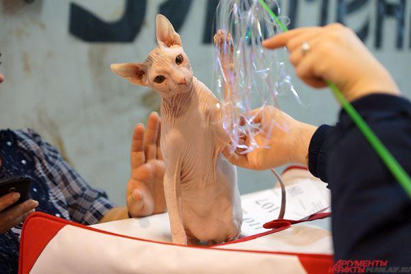 Пермяки могут проконсультироваться по поводу корма и приобрести товары для животных, например, игрушки.
