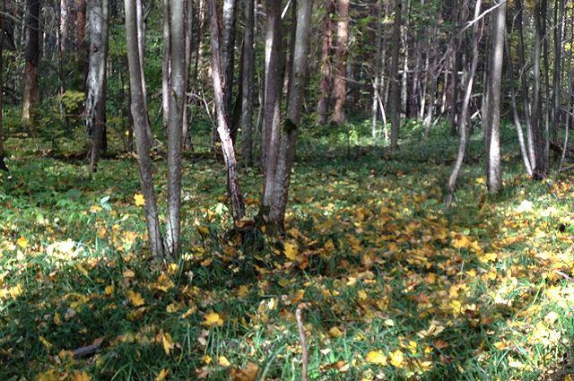 Тело мужчины нашли в лесу