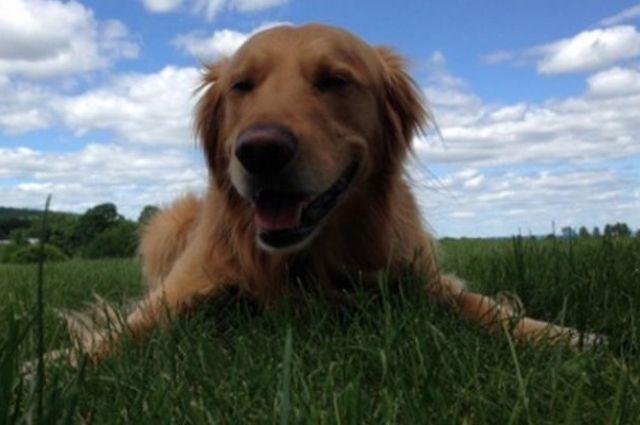 ВИспании нерадивых хозяев будут ловить поДНК-анализу собачьих экскрементов