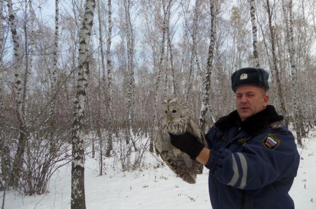 Под Красноярском полицейские спасли сову, врезавшуюся в сооружение ГИБДД