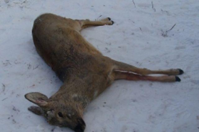 Заночной расстрел стада косуль уральский браконьер лишился 400 тыс. руб.