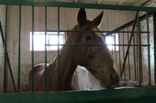В трагедию натрассе под Екатеринбургом попали лошади