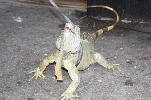 В Ботаническом саду Калининграда пройдет выставка экзотических животных.
