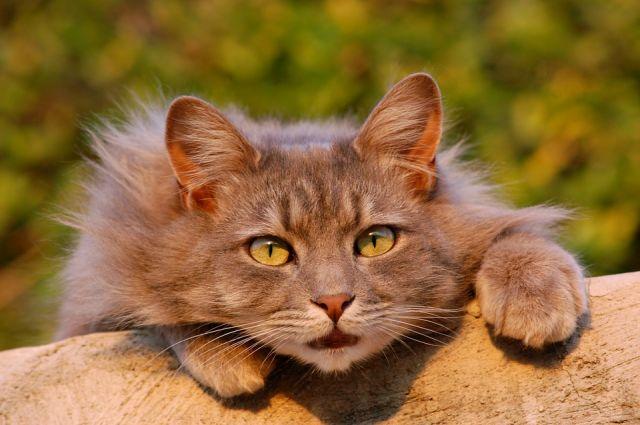 ВРостовской области бешеный кот напал натрактор