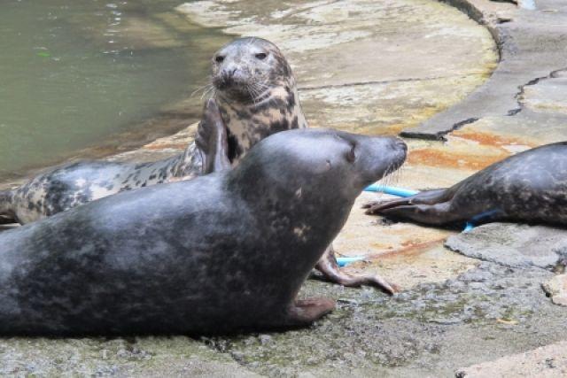 Неменее 300 мертвых тюленей найдено наберегу вДагестане