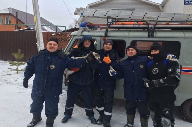 Лебединую семью вызволили изледового плена наозере вКазани