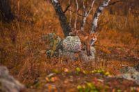 Численность лисиц будут регулировать в крае