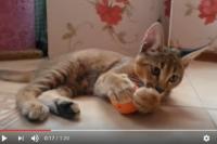 Кошка породы каракет - самая дорогая кошка в мире