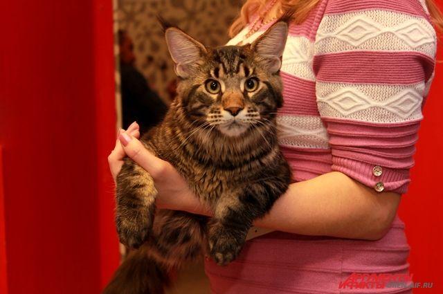Жительница Калининграда вызвала полицию, чтобы найти сбежавших котов.