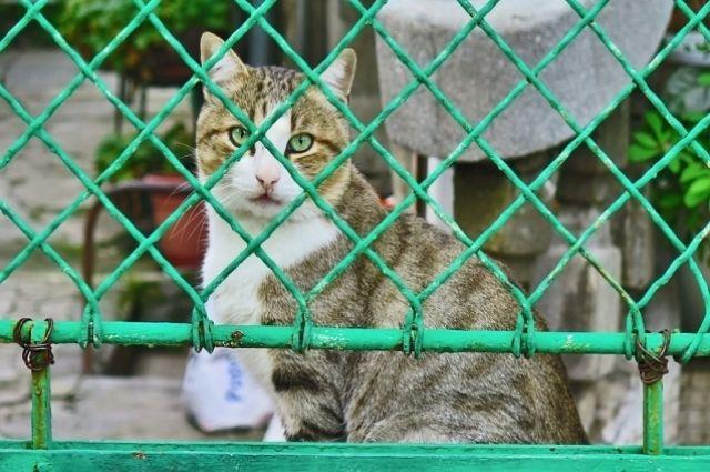 Рост ответственности за животных