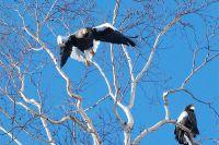Мероприятие пройдёт в природном парке «Птичья гавань».