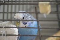По закону, животные и растения входят в перечень непродовольственных товаров, которые нельзя вернуть или обменять.