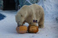 Прогноз медведя оправдался.