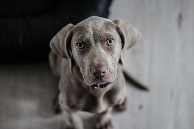 Новокузнечанин изокна 5-ого этажа выбросил собаку— Шокирующая жестокость