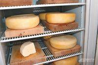 Цвет сыра зависит от его зрелости.