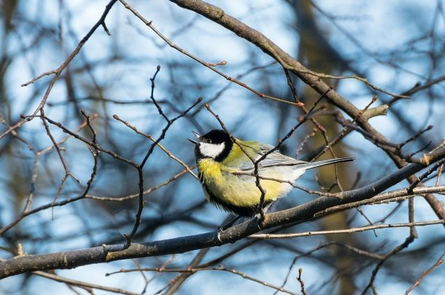 Посетители музея узнают о зимующих птицах региона.