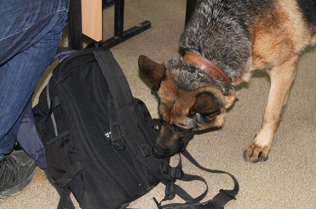 При помощи служебной собаки удалось найти наркотики в квартире задержанного.
