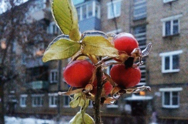 После ночного ледяного дождя коммунальные службы Ярославля работают в особенном режиме