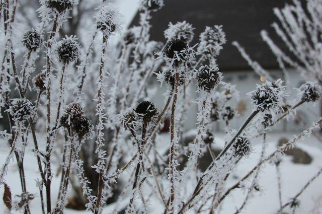 На Алтае передают метели и похолодание