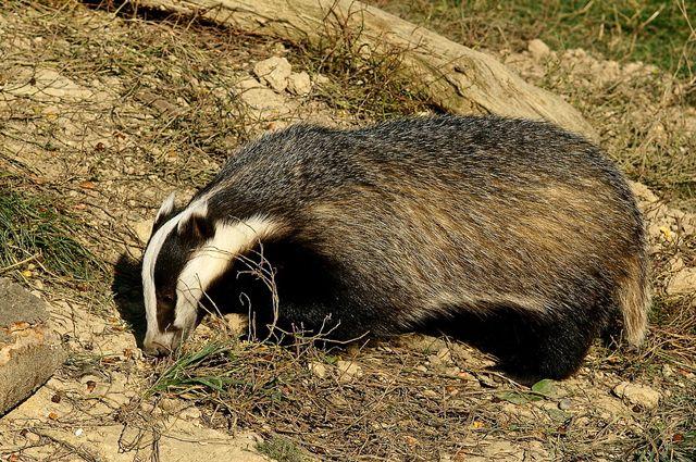 Учетные работы являются важным этапом для выявления всех изменений и колебаний численности животных.