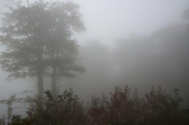 Густой туман и плохие дороги мешали поискам пропавшего в Новосергиевском районе.