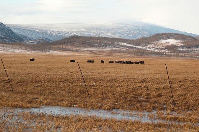 НаЯмале русские ученые обсудят состояние экосистем округа