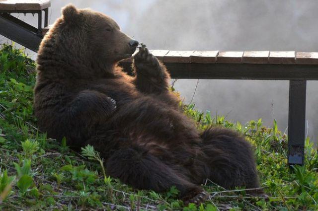 Влесу Лаишевского района охотники отыскали следы бурого медведя