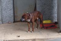 Собака, укусившая женщину, была без намордника.