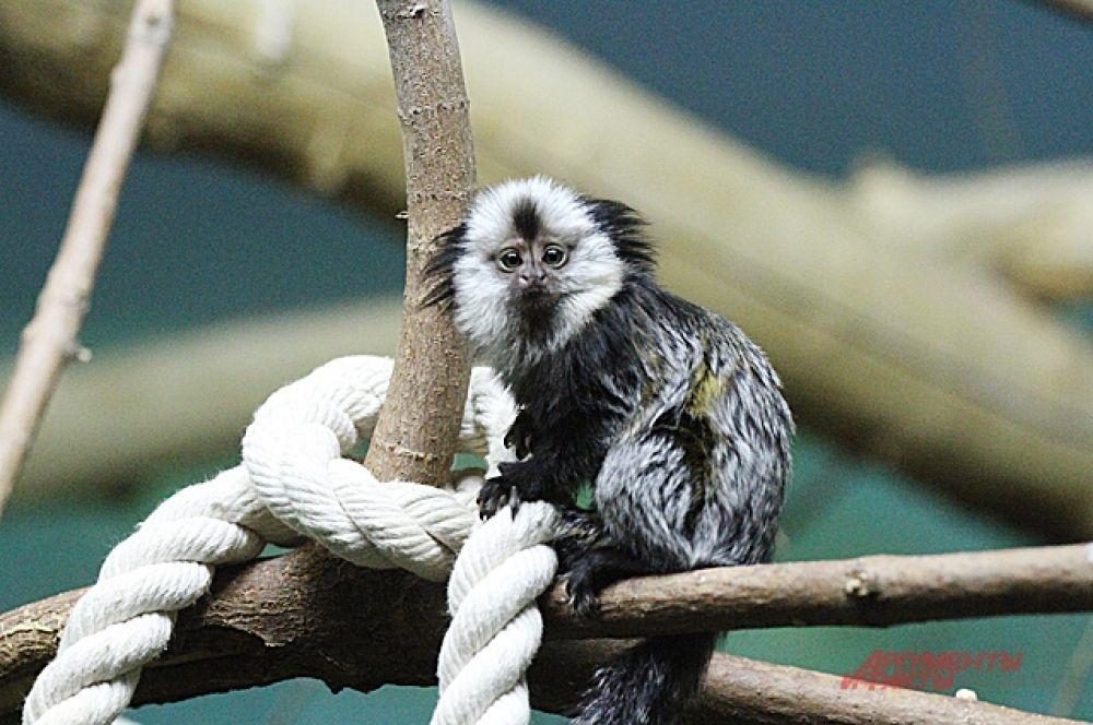В теплых вольерах зимуют рептилии, приматы, попугаи.