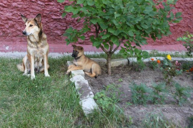 ВНижнем Новгороде безнадзорных животных стерилизуют засчет пожертвований