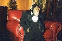 Шимпанзе Джон.
