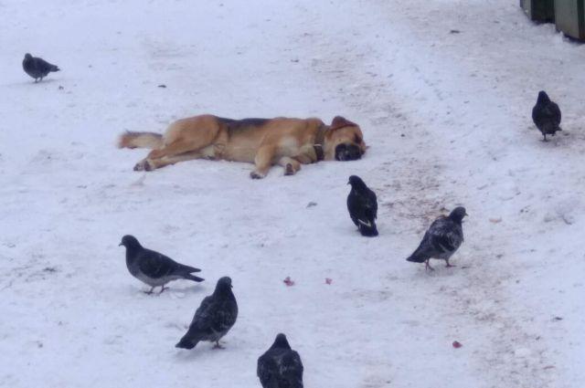 Фото опубликовали в группе «Забота о животных» г. Смоленск»