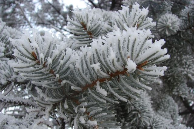 аномальные морозы пришли на Алтай