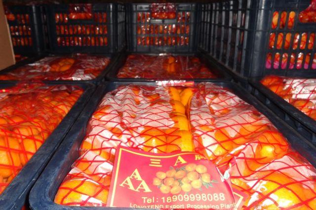 Более 8 тонн мандаринов не пустили в регион калининградские таможенники.