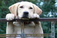 Из закрытой на карантин деревни нельзя вывозить собак.
