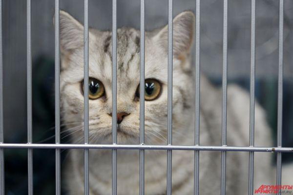 В Перми открылась выставка-ярмарка кошек.