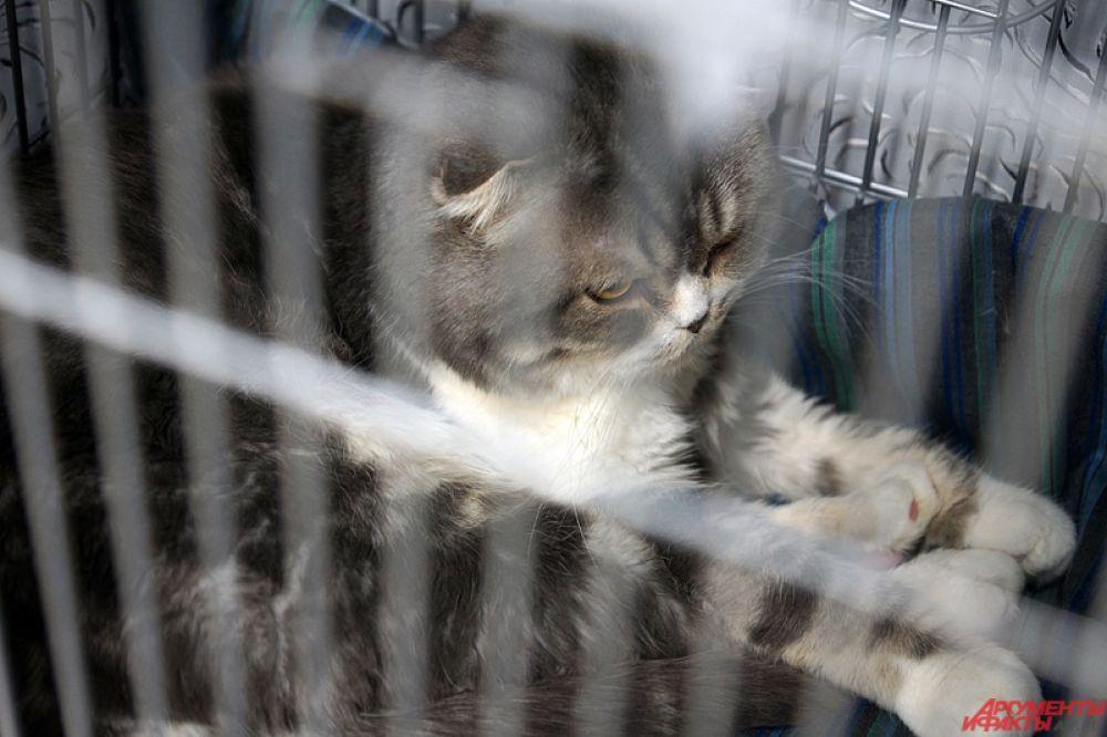 Всего на площадке заводчики представили порядка 30 пород животных.