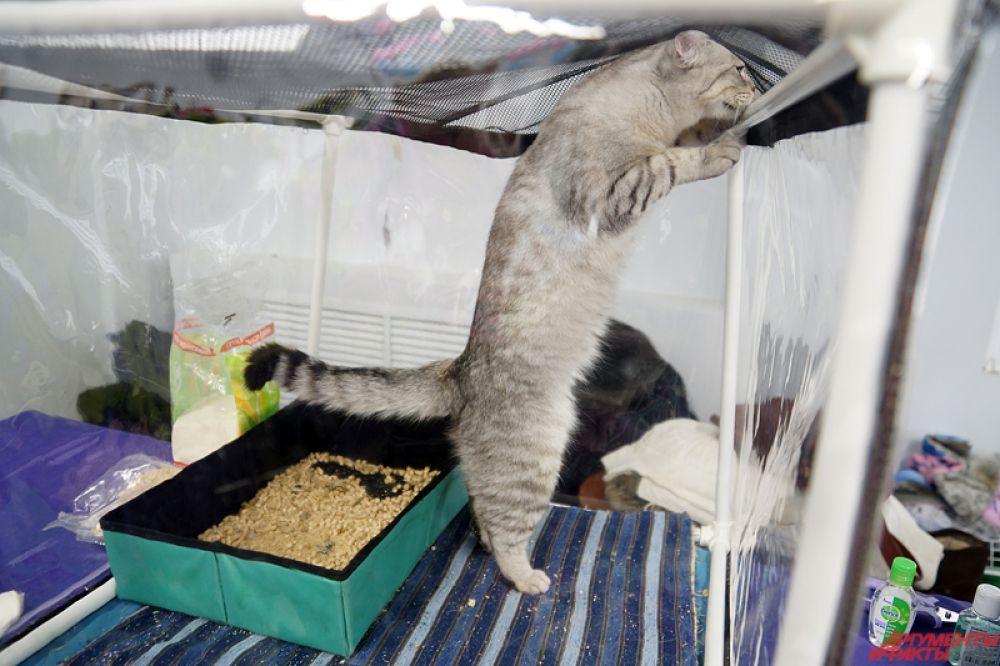 Выставка кошек продлится два дня – 19 и 20 ноября.