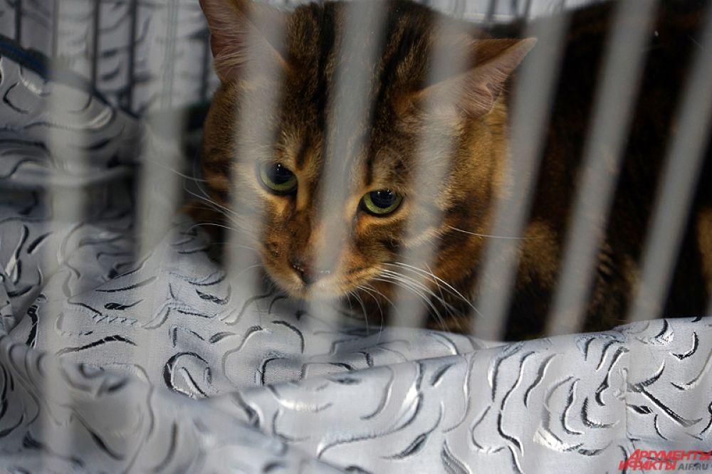 На небольшой территории для гостей мероприятия представлены десятки пород кошек.