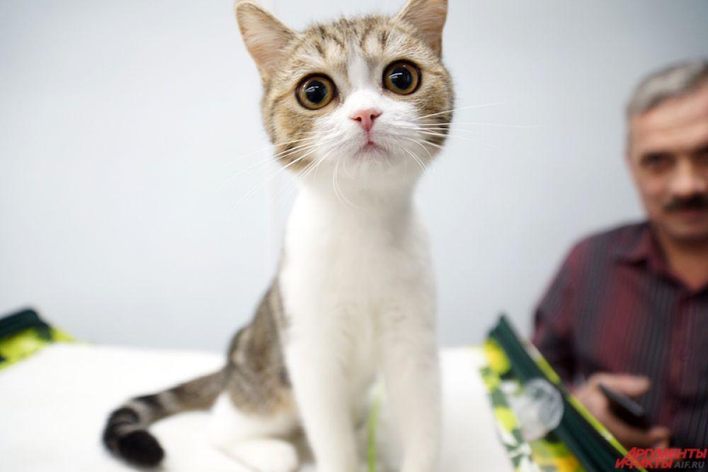 Погладить кошку может любой человек.