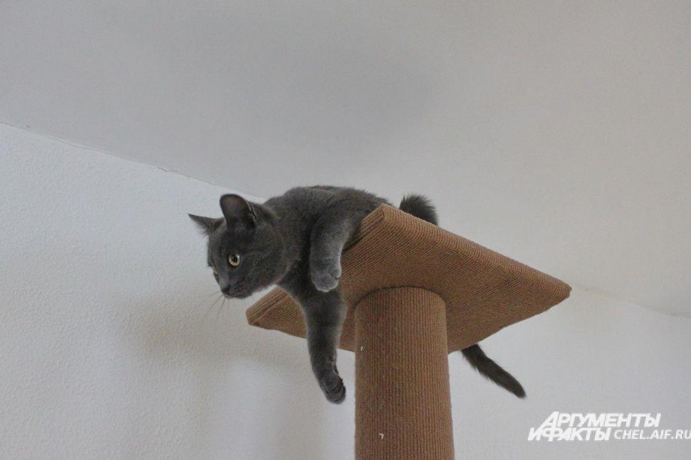Сверху удобнее наблюдать за гостями.