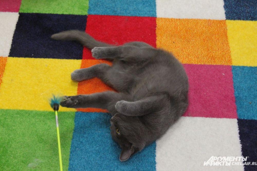 В котокафе много мягких ковров и специальных игрушек, чтобы весело провести время.