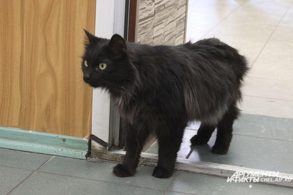 Монти - серьёзный кот, предпочитет присматривать за всей территорией.