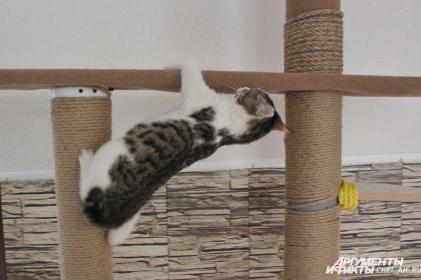 В распоряжении кошек - целый комплекс с площадками для лазания.