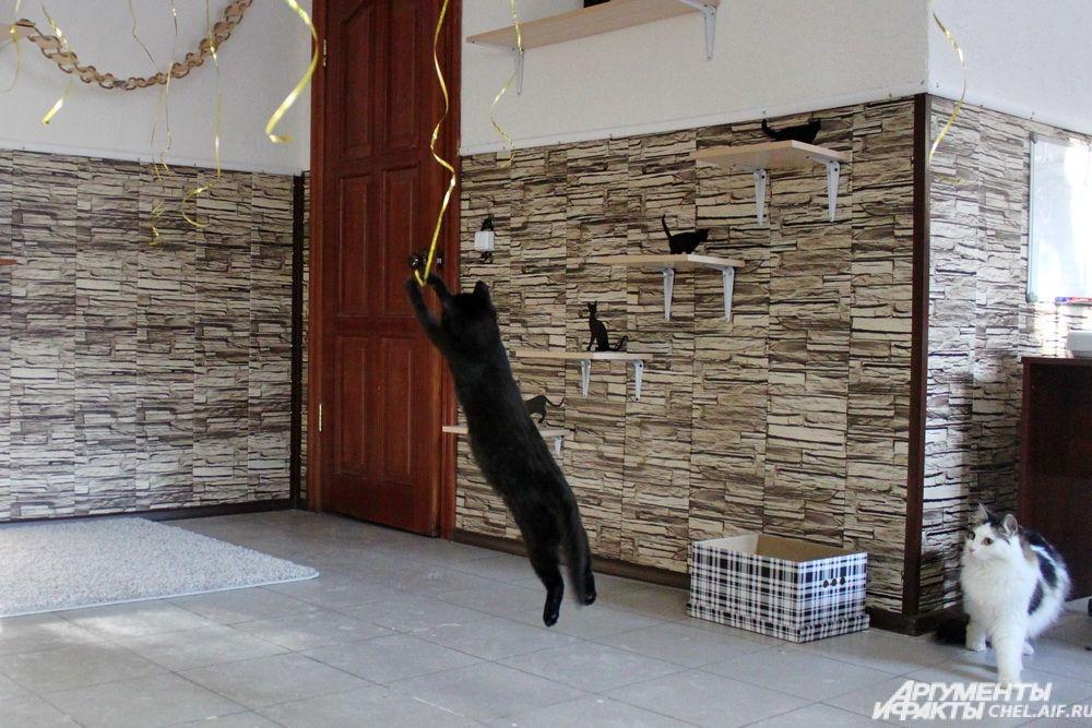 Пока одни питомцы спокойно рассматривают гостей, другие умудряются играть даже с ленточками от висящих под потолком воздушных шаров.
