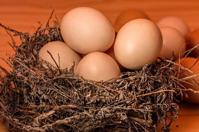 В крае увеличилось производство яиц