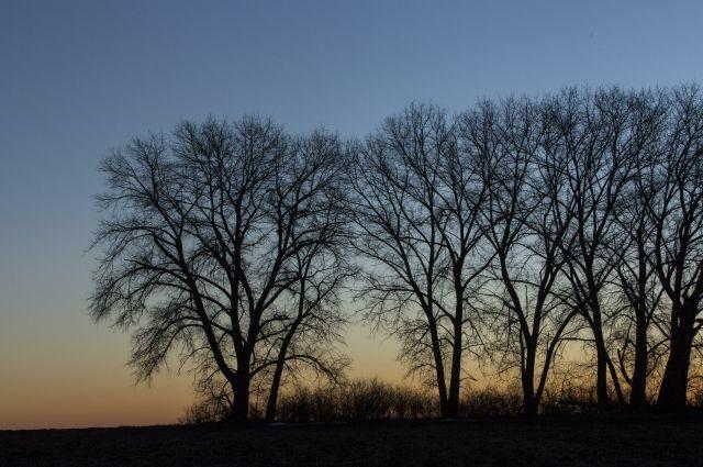 ВТюменской области мужчина нелегально нарубил деревьев на260 тыс. руб.