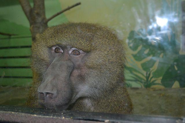 Пензенцы не оставили питомцев зоопарка без сладостей.